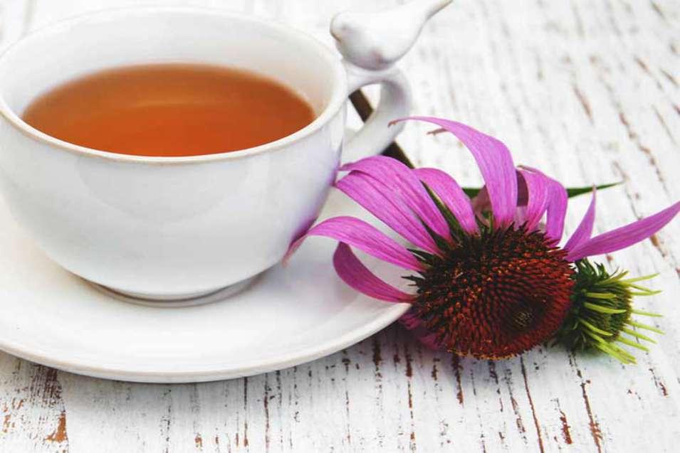 Ekinezya Çayının Faydaları Yapılışı ve Tüketimi