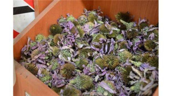 Ekinezya Çiçek 100 Gr